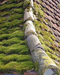technitoit_vegetation_toiture