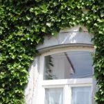 façade ou mur végétalisé