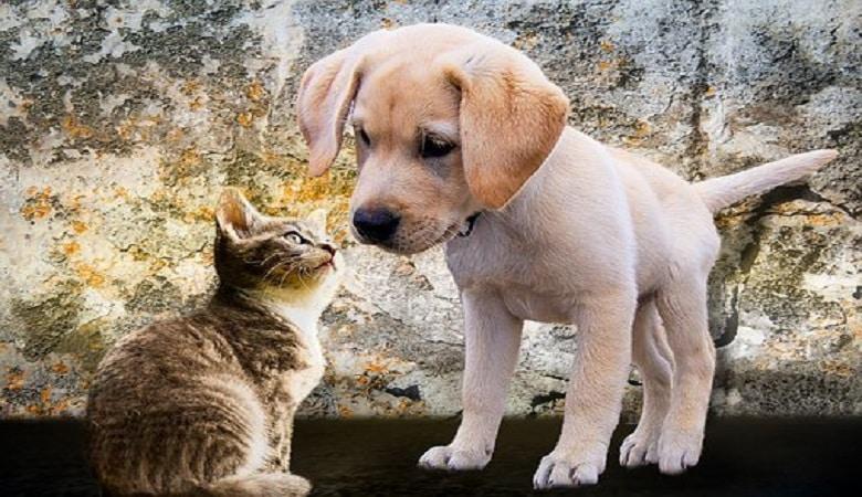 comment lutter contre les nuisances des animaux