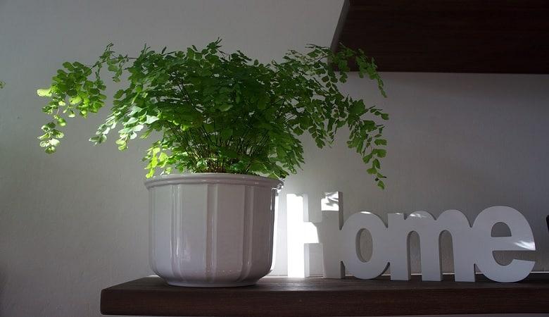 comment avoir une décoration green