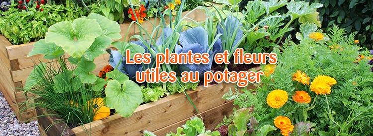 les plantes et fleurs utiles au potager