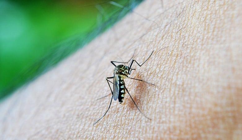 se protéger des moustiques avec le parefeuille