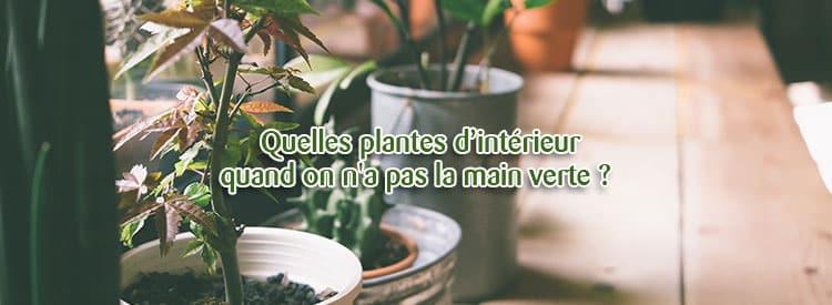 quelles plantes d'intérieur quand on n'a pas la main verte