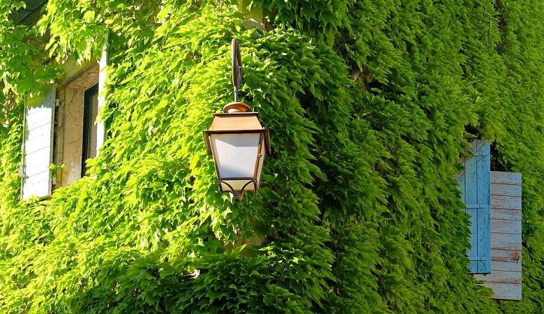 végétation sur la façade quels risques et quelles solutions