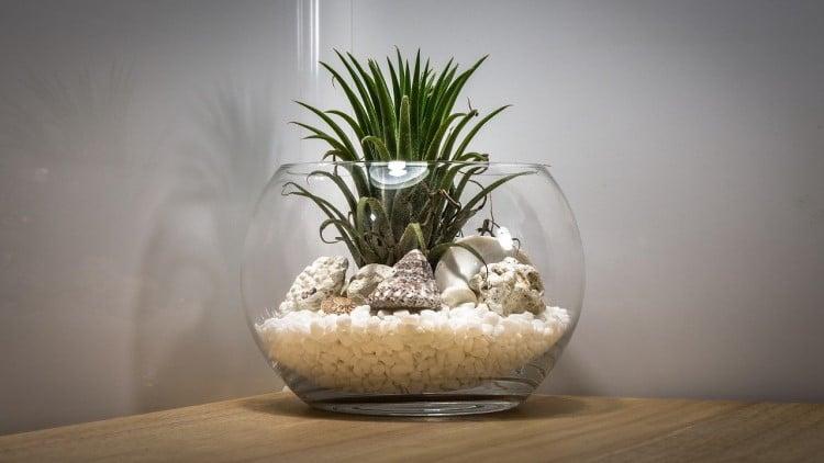 Terrarium Plante Interieur