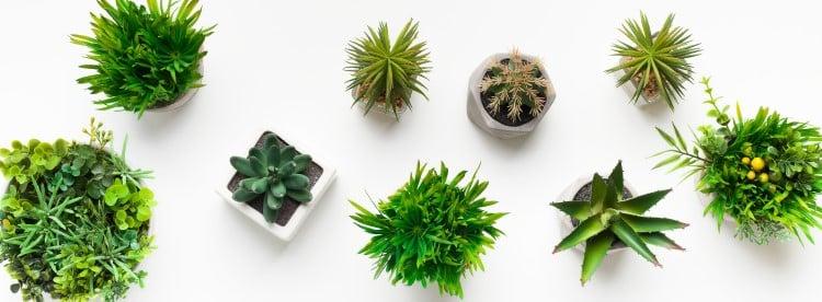 où acheter plantes artificielles de qualité