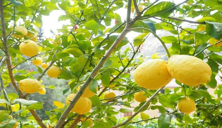 quand planter des arbres fruitiers