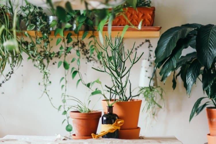 offrir des plantes