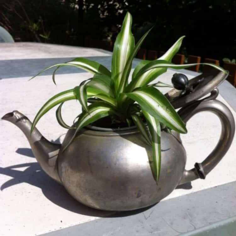 recyclage theiere pot à fleurs
